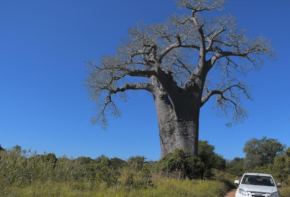 Engitagus ajudam em Moçambique